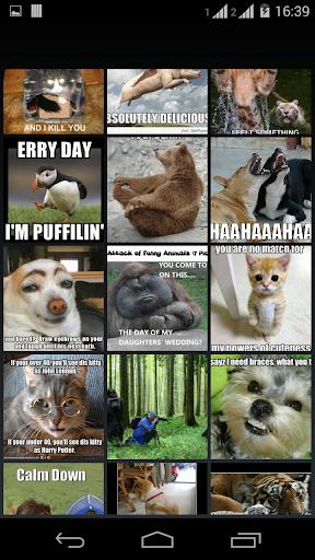 meme FUNNY ANIMALS
