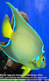Marine Aquarium Fish- screenshot thumbnail