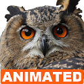 Owl Live Wallpaper icon