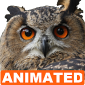 Owl Live Wallpaper