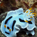 Diane's Chromodoris
