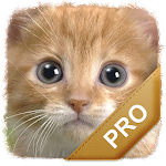 Cat Names Pro