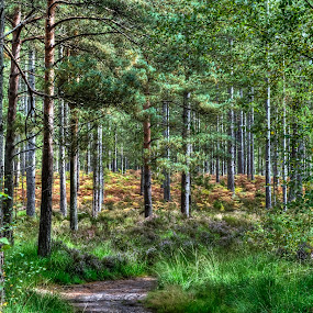 Ashley Heath Walk - Hampshire, England by Skye Ryan-Evans - Landscapes Forests ( woodlands, english forest, forest path, walking in the woods, nature walk, green, plants, forest, forest trail, woods, hampshire scenery, foliage, trees, ashley heath, heath )