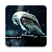 Sad Owl HD Livewallpaper