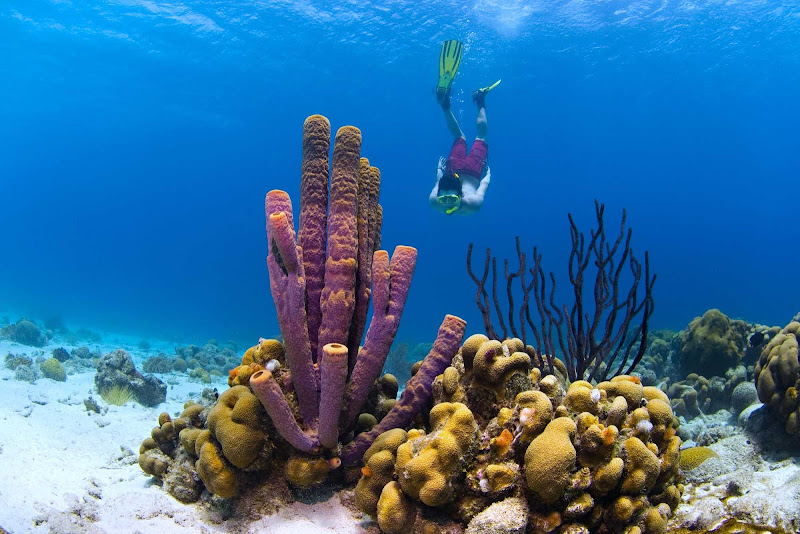 Curacao has some of the best coral reefs for snorkeling and scuba diving in the Caribbean.