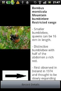 Identify Irish Bumblebees- screenshot thumbnail