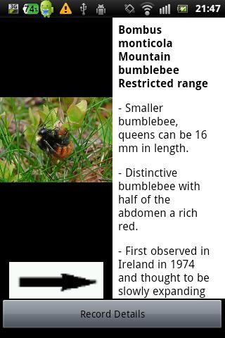 Identify Irish Bumblebees- screenshot
