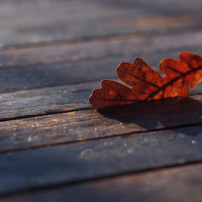 Fallen leaf. by Silvana van Engelen - Artistic Objects Still Life ( winter, wood, shadow, leaf, table, bokeh )