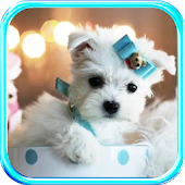 Puppy Glamour live wallpaper