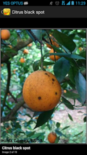 Citrus Diseases Key- screenshot thumbnail
