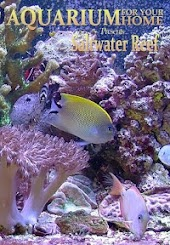 Aquarium for Your Home Presents Saltwater Reef