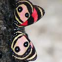Two-eyed Eighty-eight