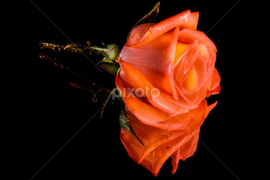 by Bob Gan Ferrer - Flowers Single Flower