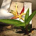 Parakeet flower