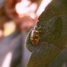 Cucumber beetle.