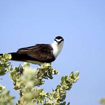 Saudi Wildlife