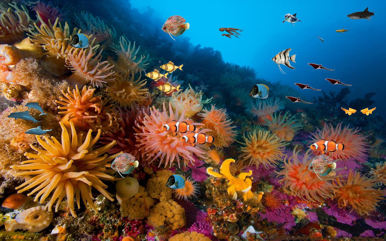 how to set up 20l blue planet aquarium