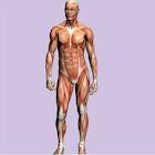 Spanish Medical Anatomy Guide icon