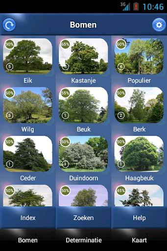 Boom Id - Bomen van Europa