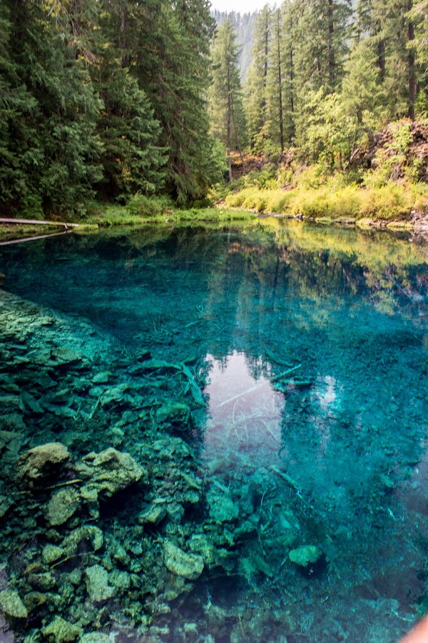 Blue Pool on the Mckenzie River by Alex W. - Landscapes Waterscapes ( amazing, nature, blue, pool, clearwater, unbelievable, head water, natural, pristine,  )