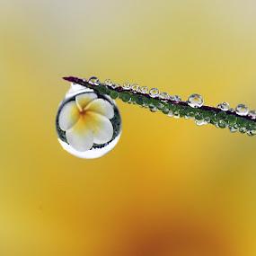 :: Single :: by Dedy Haryanto - Nature Up Close Natural Waterdrops