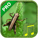 Cricket Sounds PRO