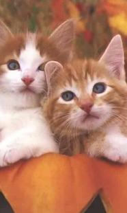 可愛的小貓壁紙