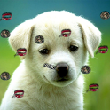 Puppy Live Wallpaper 2 icon