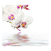 Orchids In Water VIII