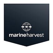 Marine Harvest Recipes