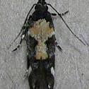 Red-necked Peanutworm Moth