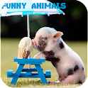 Funny Animals Pictures icon