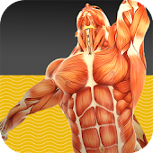 Muscle Tests 1