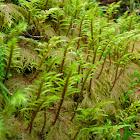 stair step moss