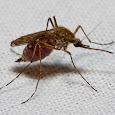 Pest species of Iowa, Wisconsin, Minnesota & Illinois