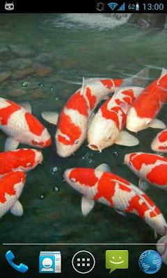 Magic Touch Koi Fish - screenshot