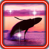 Dolphins Collection HD LWP