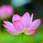 Phật Giáo Chính Tín icon