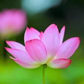 Phật Giáo Chính Tín