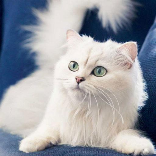 Stunning Cats Images 娛樂 App LOGO-APP試玩