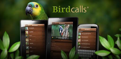 Bird Ringtones - Free by ZEDGE