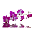 Orchid Bubbles II icon