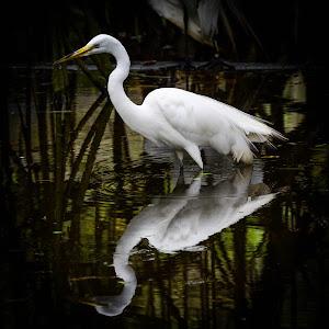 White Crane Filimango Garden.jpg
