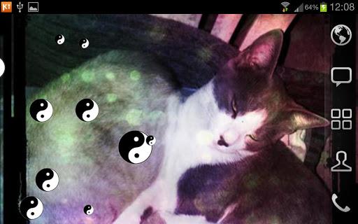 【免費個人化App】Yng Yang Cat LWP FREE-APP點子