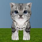My Dear Kitty icon