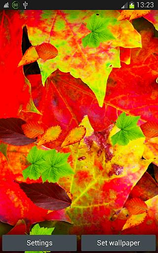 Autumn Fall Leaves Wallpaper