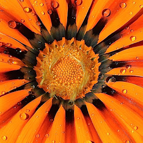 Flower Macro by Ed Hanson - Flowers Single Flower ( center, orange, macro, nature, flower )