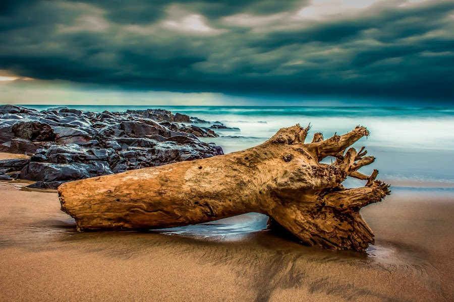 Driftwood Lost& Found by Carl Müller - Landscapes Cloud Formations ( clouds, boulders, driftwood, sea, beach, rocks )