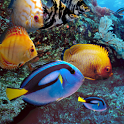 Real Aquarium Live Wallpaper icon