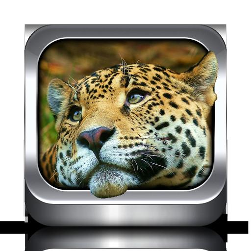 動物の着信音 娛樂 App LOGO-硬是要APP
